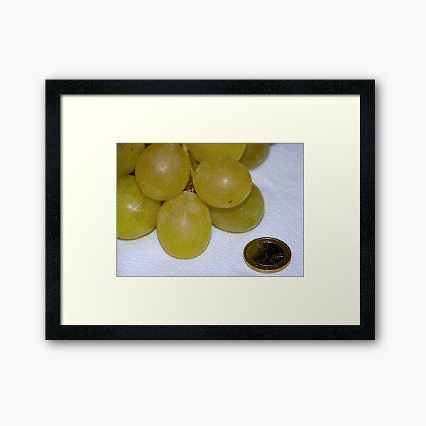 Monster Moscato grapes, Bolzano/Bozen, Italy Framed Art Print