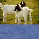 Two Goats by ValeriesGallery