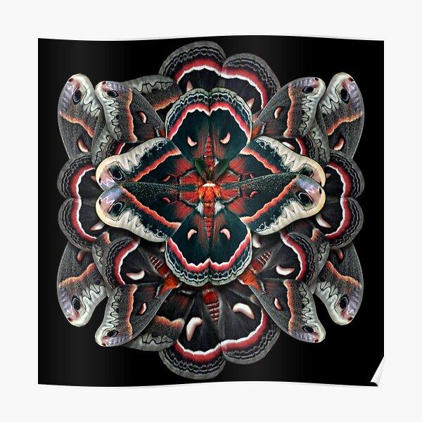 Cecropia Moth Mandala - Asymmetrical Poster