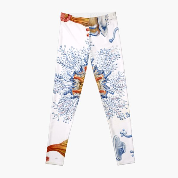 Haeckel Siphonophorae. Siphonophorae is an order of Hydrozoans, a class of marine organisms belonging to the phylum Cnidaria Leggings