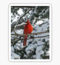 Red Bird in Winter Sticker