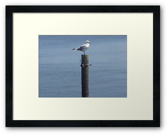 Cape Cod Gull by CWCards2013