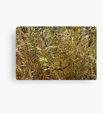 Goldrush Canvas Print