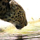 Drinking Leopard by Madsen1981