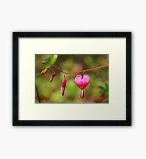 Bleeding Heart Framed Print