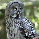 Owl by Madsen1981