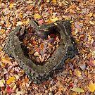 Autumn heart by Dalmatinka
