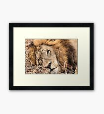 ONE BLUE... ONE YELLOW ? Framed Print