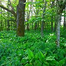 Wooded Area - Lews Castle Grounds von BlueMoonRose