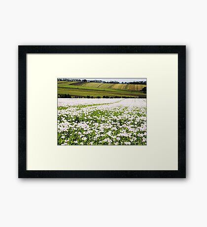 Poppy Field at Table Cape Framed Print