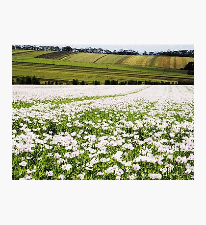 Poppy Field at Table Cape Photographic Print