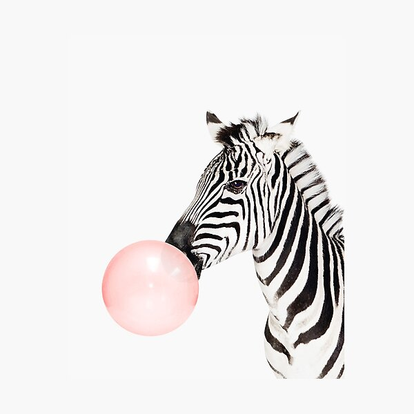 Zebra print, Bubble gum, Nursery art, Zebra wall art, Animal, Kids room, Modern art, Wall decor Photographic Print