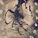 Rock rooster by evon ski