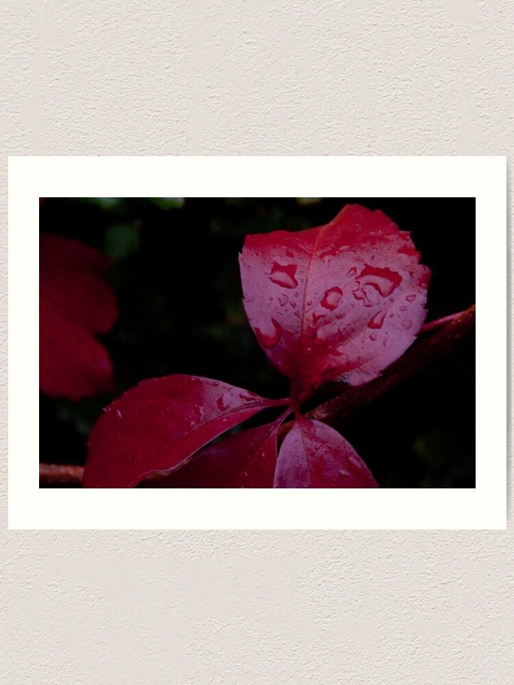 Alternate view of Red Leaf Raindrops, Bolzano/Bozen, Italy Art Print