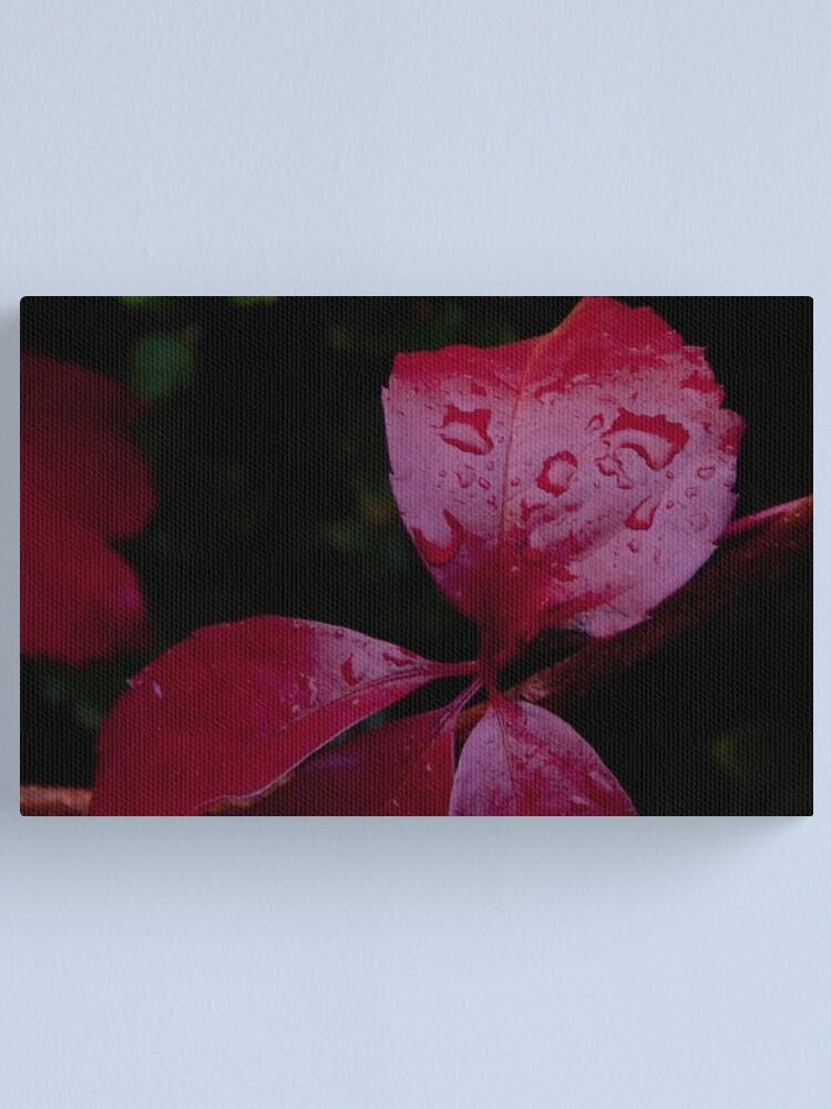 Alternate view of Red Leaf Raindrops, Bolzano/Bozen, Italy Canvas Print