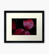 Red Leaf Raindrops, Bolzano/Bozen, Italy Framed Print