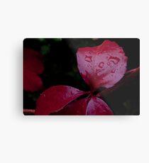 Red Leaf Raindrops, Bolzano/Bozen, Italy Metal Print