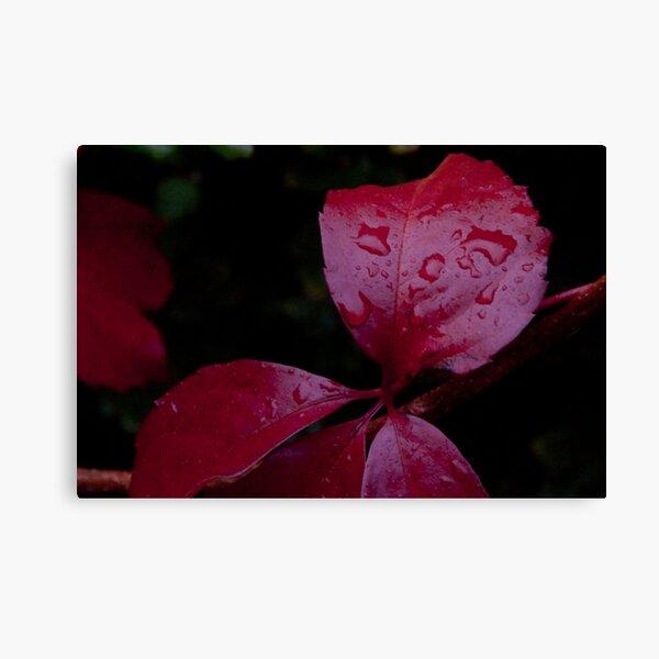 Red Leaf Raindrops, Bolzano/Bozen, Italy Canvas Print