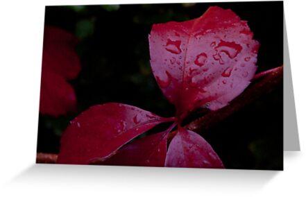 Red Leaf Raindrops, Bolzano/Bozen, Italy by L Lee McIntyre