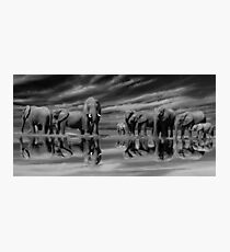 The Addo Elephants Photographic Print