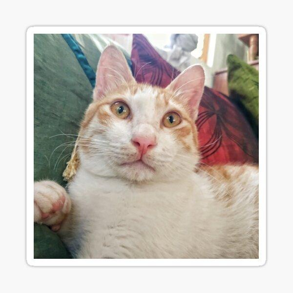 Rex the Cat! Sticker