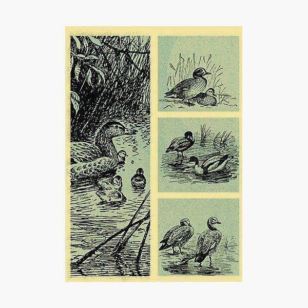Vintage Birds Photographic Print