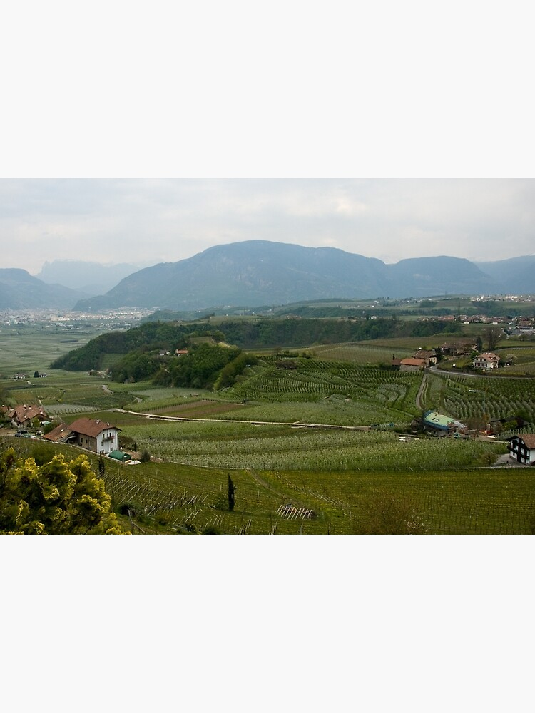 Valley with vineyards and apple orchards near Bolzano/Bozen, Italy by leemcintyre