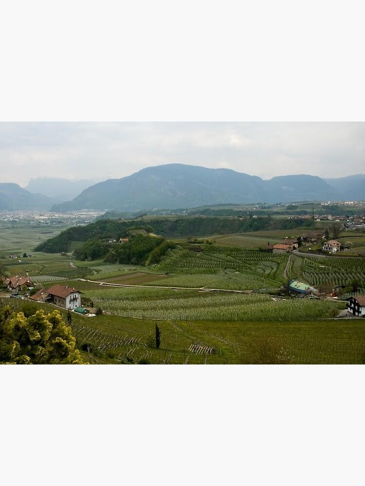 Valley with vineyards and apple orchards near Bolzano/Bozen, Italy by leemcintyre
