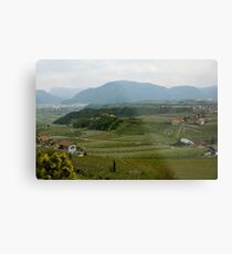 Valley with vineyards and apple orchards near Bolzano/Bozen, Italy Metal Print