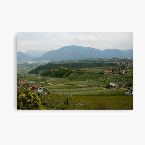 Valley with vineyards and apple orchards near Bolzano/Bozen, Italy Canvas Print