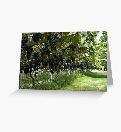 Grapes in the Castle Mareccio Vineyard, Bolzano/Bozen, Italy Greeting Card