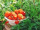 Garden Goodies by FrankieCat