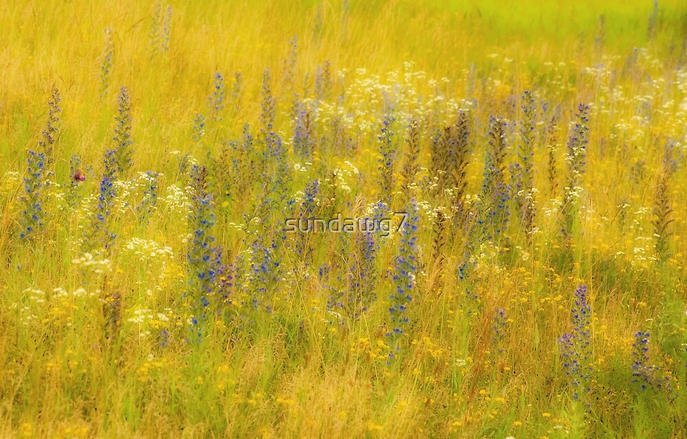Meadow Bouquet by sundawg7