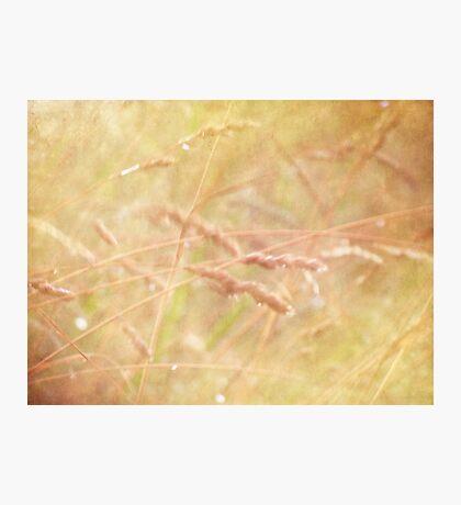 wild grasses 7 Photographic Print