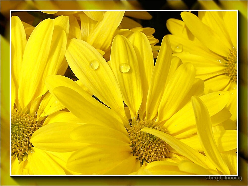 yellow dream by Cheryl Dunning