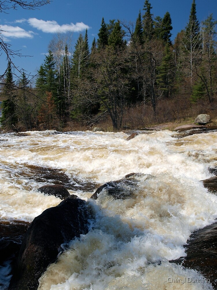 rapid view by Cheryl Dunning