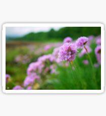 Pink Flower Blossom by the Loch! Sticker