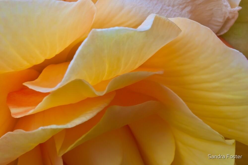 Begonia Macro by Sandra Foster