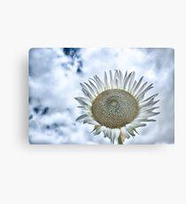 Sunflower Afternoon Metal Print