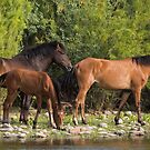 Family Time on the River by Sue  Cullumber