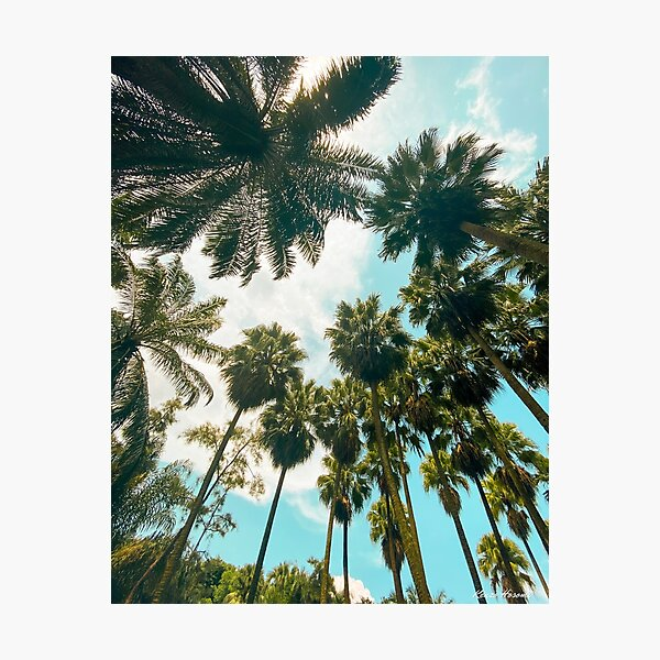Palm tree paradise Photographic Print