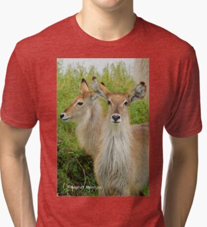 THE YOUNG ONES - THE WATERBUCK - Kobus ellipsiprymnus Tri-blend T-Shirt