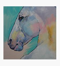 Lipizzan Stallion Photographic Print