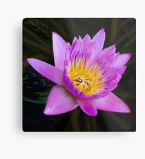 Floral Beauty Metal Print