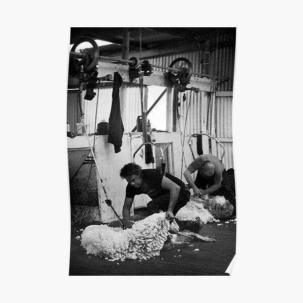 Shearing #08 - Clifton Farm , Dumbleyung Poster
