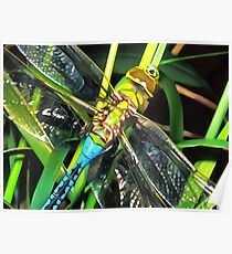 Blue Dragonfly Wings Poster