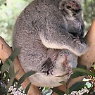 Koala & Baby Mother's Day card by Beesty