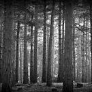 Troll Forest by Ed Sweetman