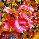 blazing pear tree by LoreLeft27