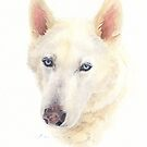 husky dog watercolor by Mike Theuer